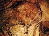 A photo of Ice Age bison in the cave of prehistoric paintings at Altimura, Spain