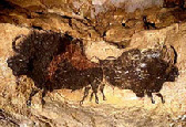 A photo of Ice Age bison in the cave of prehistoric paintings at Lascaux, France